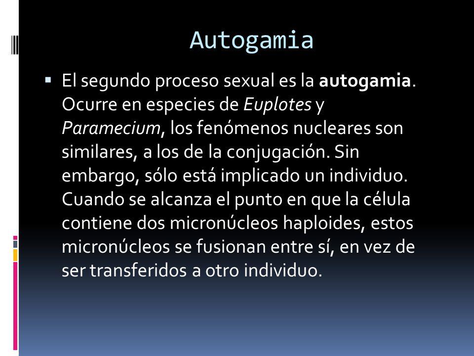 Autogamia