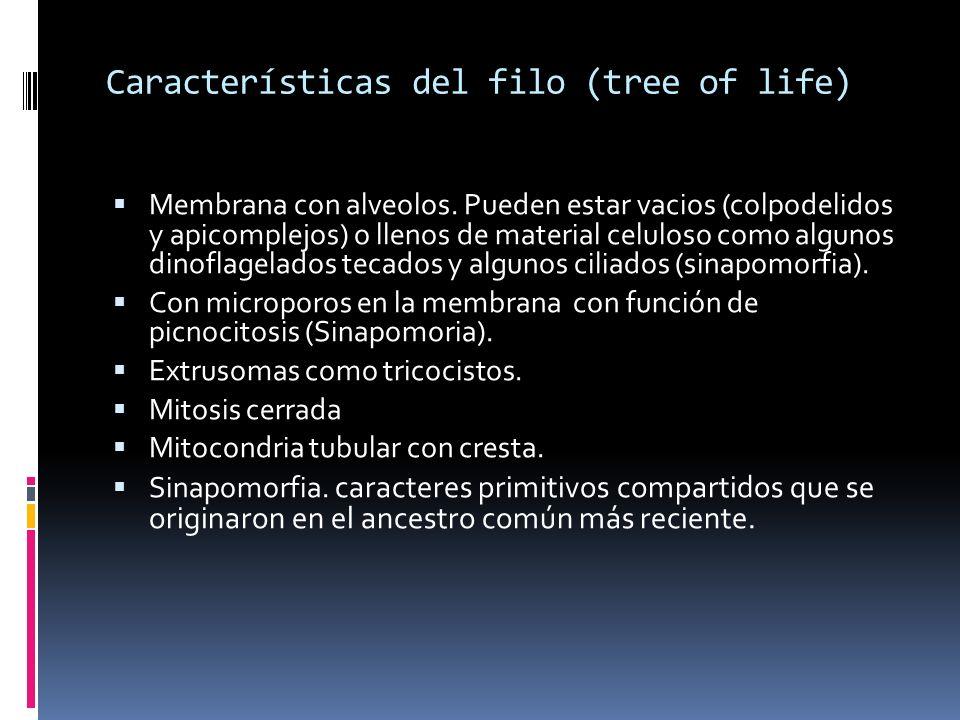 Características del filo (tree of life)