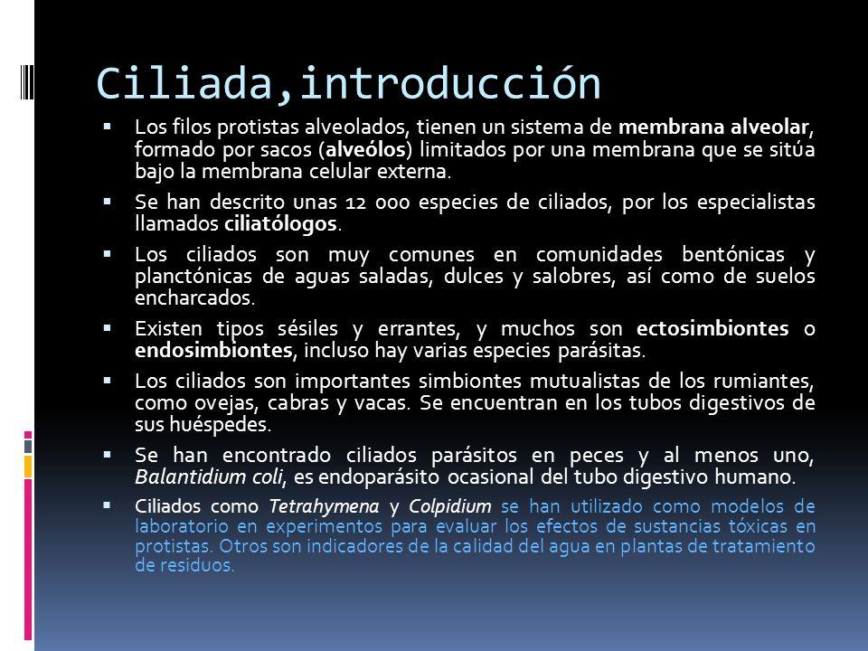 Ciliada,introducción