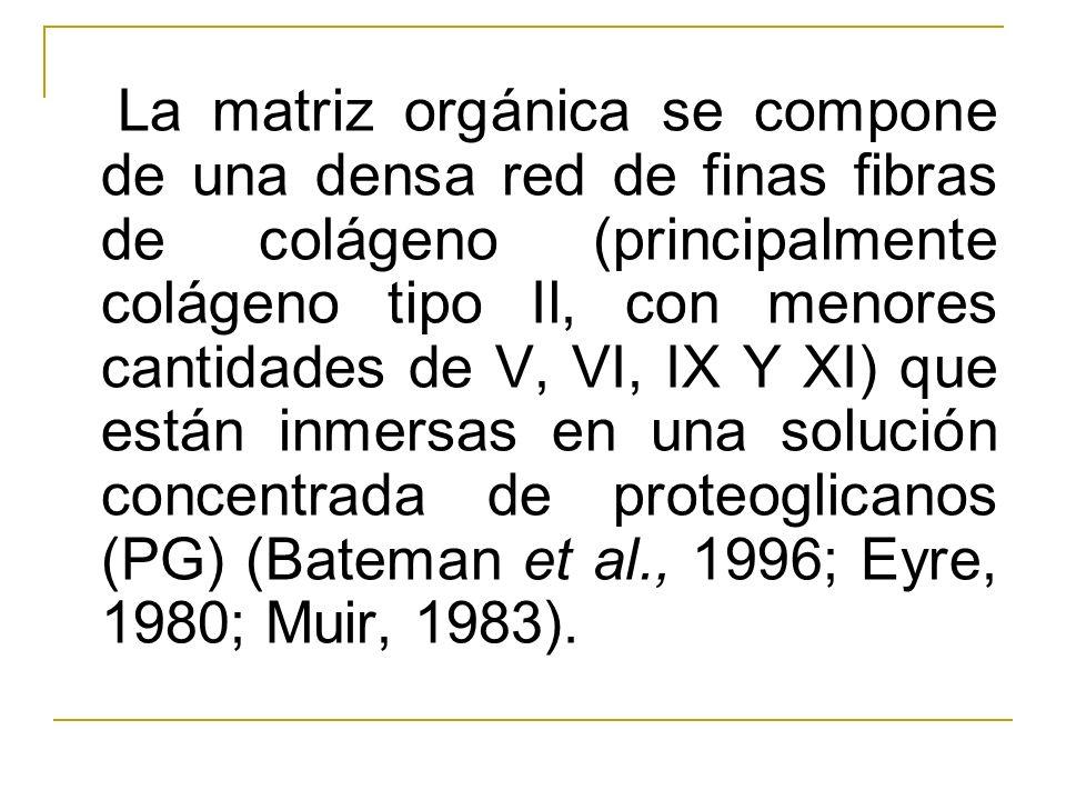 La matriz orgánica se compone de una densa red de finas fibras de colágeno (principalmente colágeno tipo Il, con menores cantidades de V, VI, IX Y XI) que están inmersas en una solución concentrada de proteoglicanos (PG) (Bateman et al., 1996; Eyre, 1980; Muir, 1983).