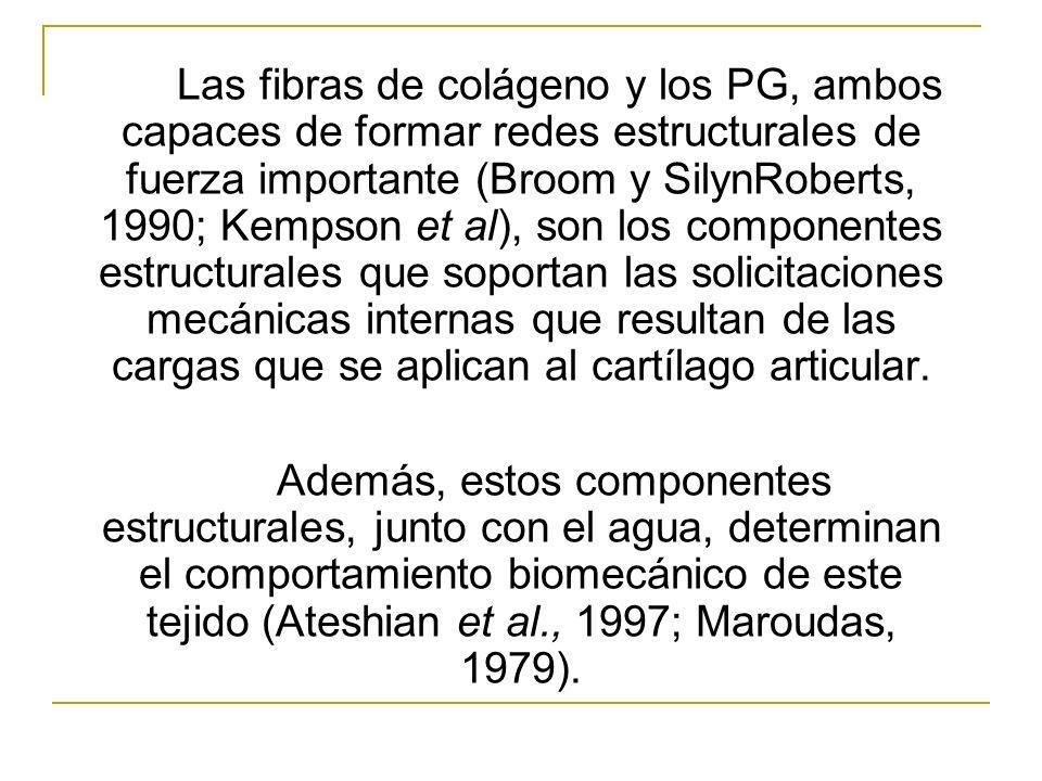 Las fibras de colágeno y los PG, ambos capaces de formar redes estructurales de fuerza importante (Broom y SilynRoberts, 1990; Kempson et al), son los componentes estructurales que soportan las solicitaciones mecánicas internas que resultan de las cargas que se aplican al cartílago articular.