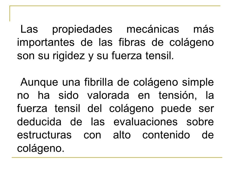 Las propiedades mecánicas más importantes de las fibras de colágeno son su rigidez y su fuerza tensil.