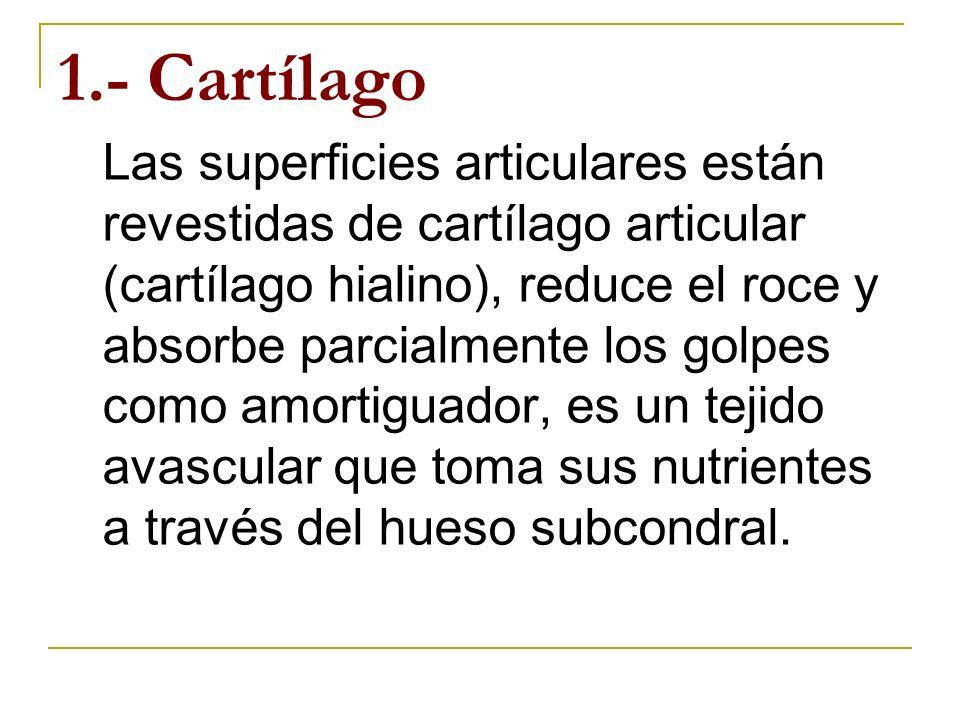 1.- Cartílago
