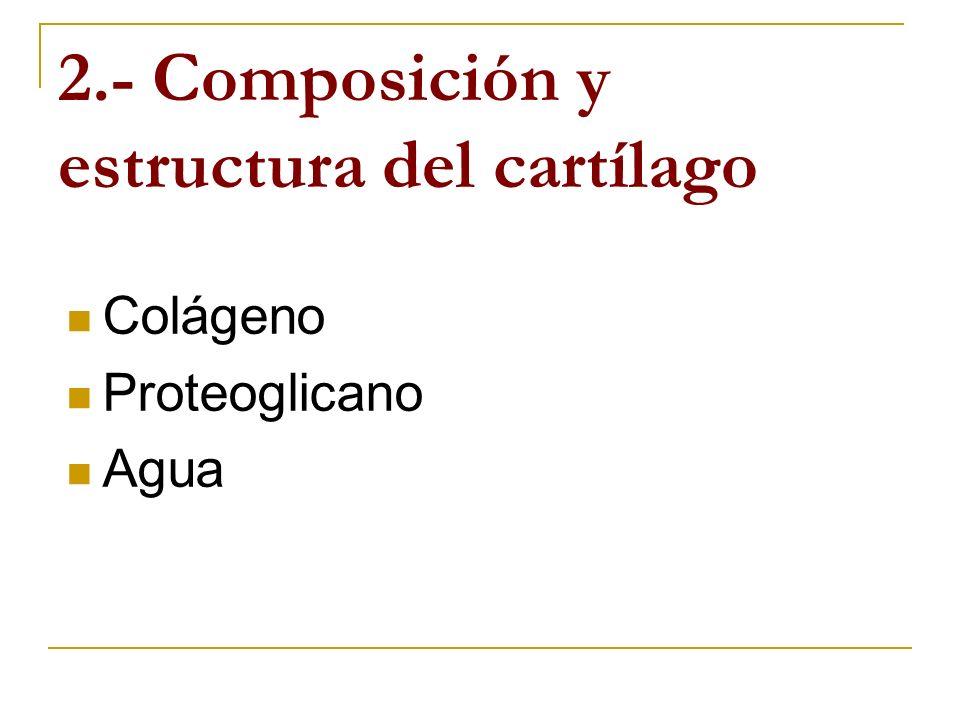 2.- Composición y estructura del cartílago