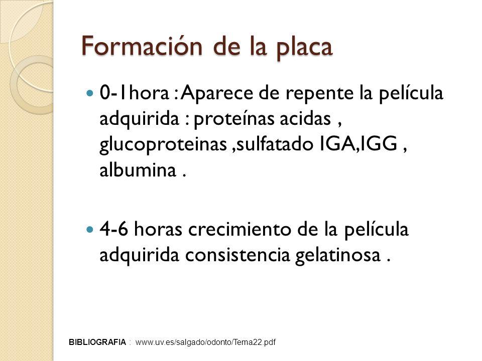 Formación de la placa 0-1hora : Aparece de repente la película adquirida : proteínas acidas , glucoproteinas ,sulfatado IGA,IGG , albumina .