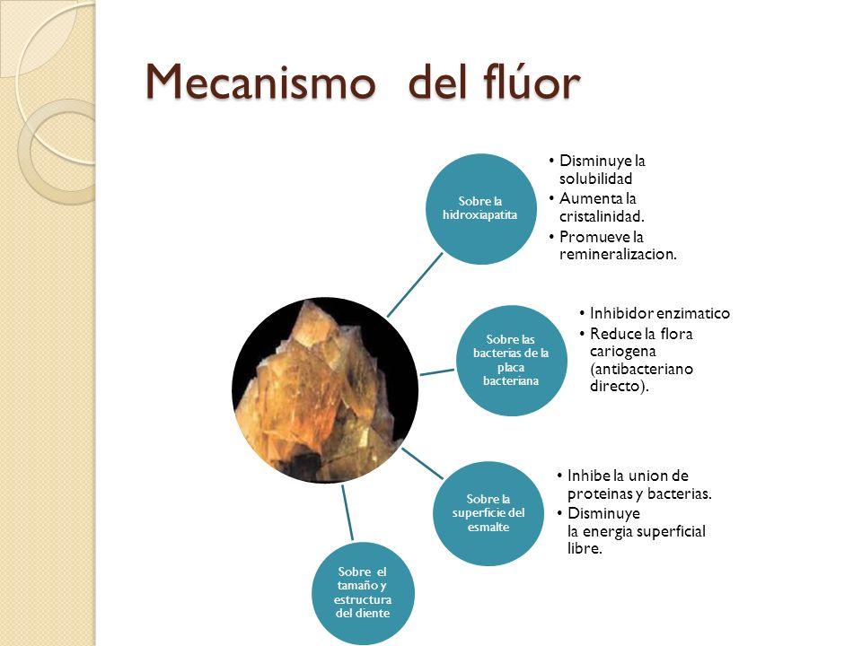 Mecanismo del flúor Sobre el tamaño y estructura del diente