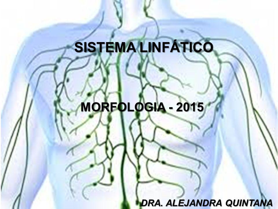 Perfecto Diagrama Linfático Colección - Anatomía de Las Imágenesdel ...