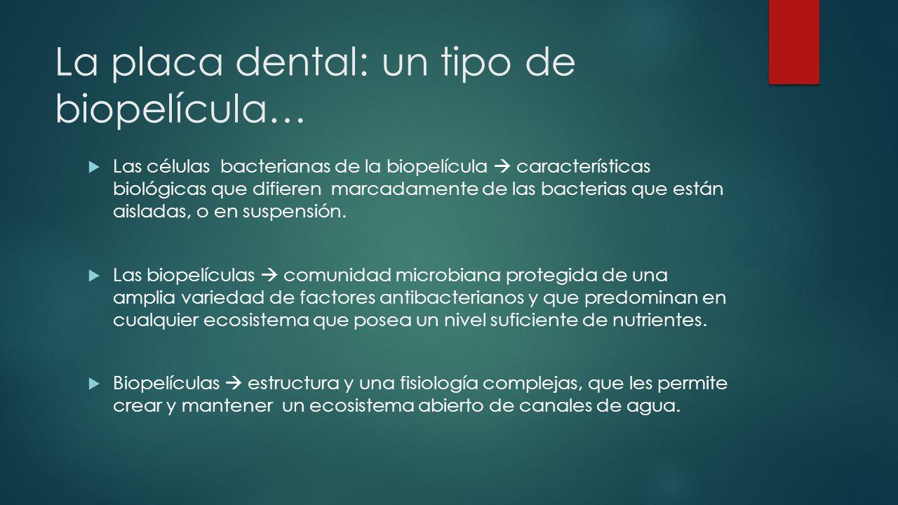 La placa dental: un tipo de biopelícula…