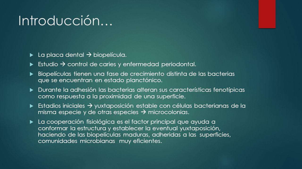 Introducción… La placa dental  biopelícula.