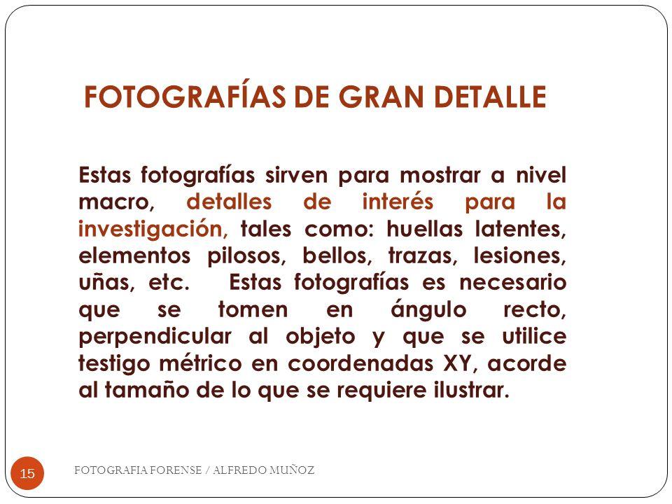 FOTOGRAFÍAS DE GRAN DETALLE