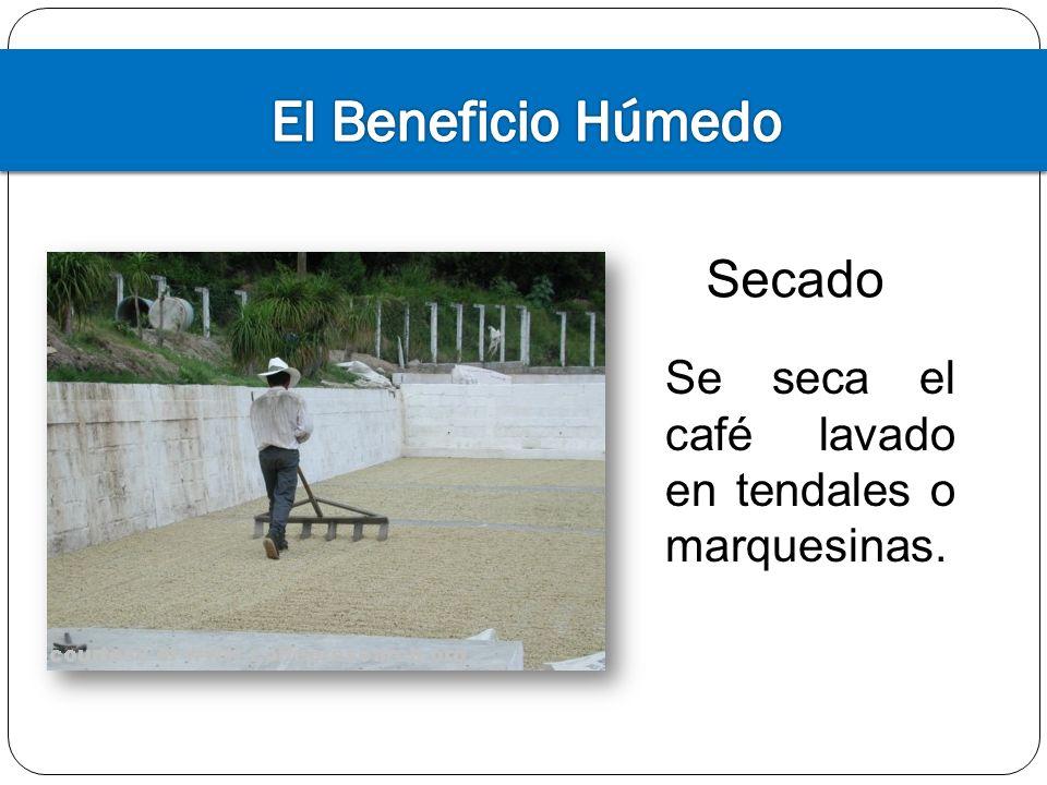 El Beneficio Húmedo Secado