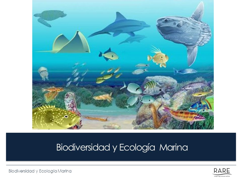 Biodiversidad y Ecología Marina