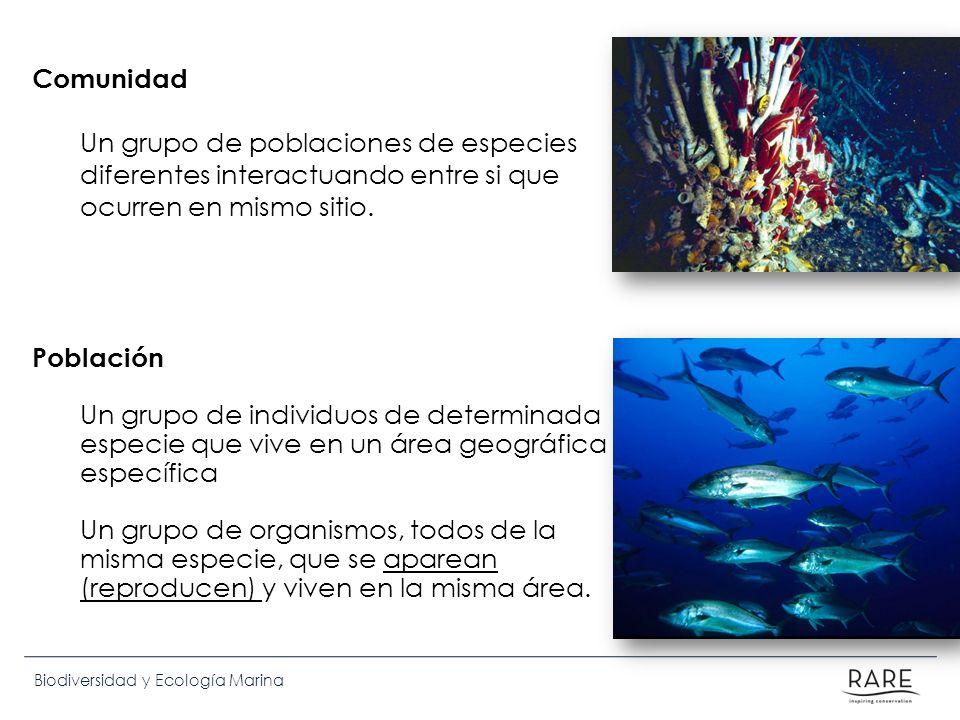 Comunidad Un grupo de poblaciones de especies diferentes interactuando entre si que ocurren en mismo sitio.