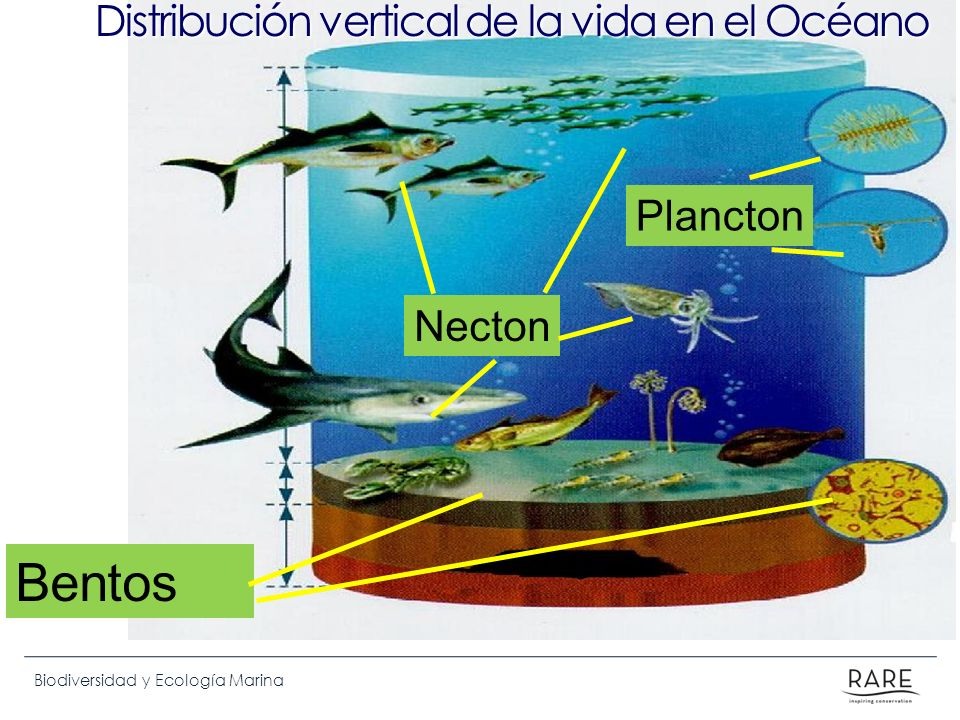 Distribución vertical de la vida en el Océano