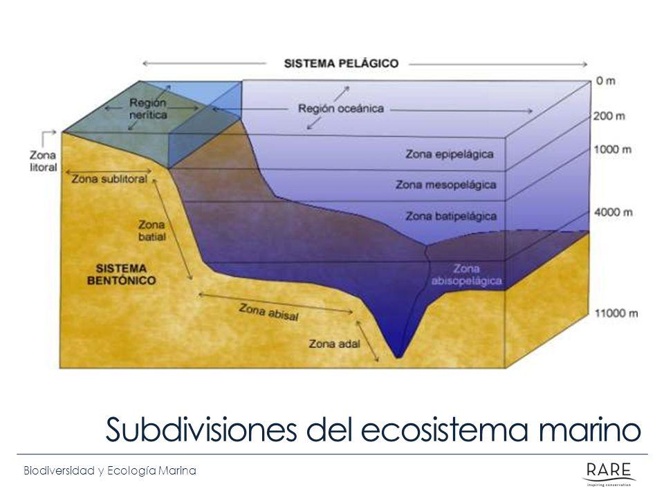 Subdivisiones del ecosistema marino