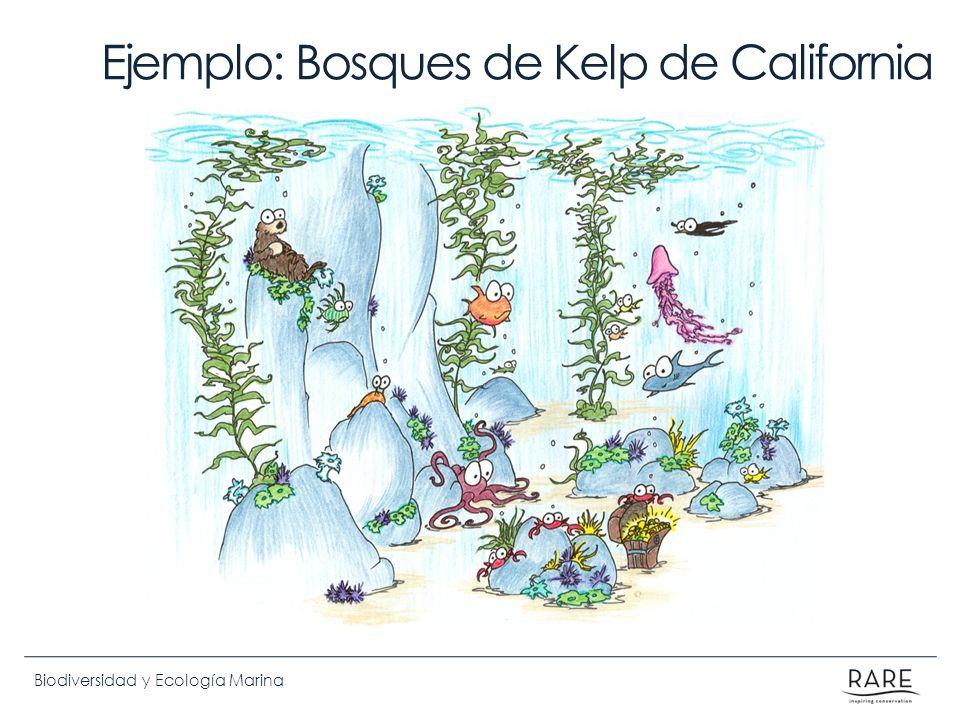 Ejemplo: Bosques de Kelp de California