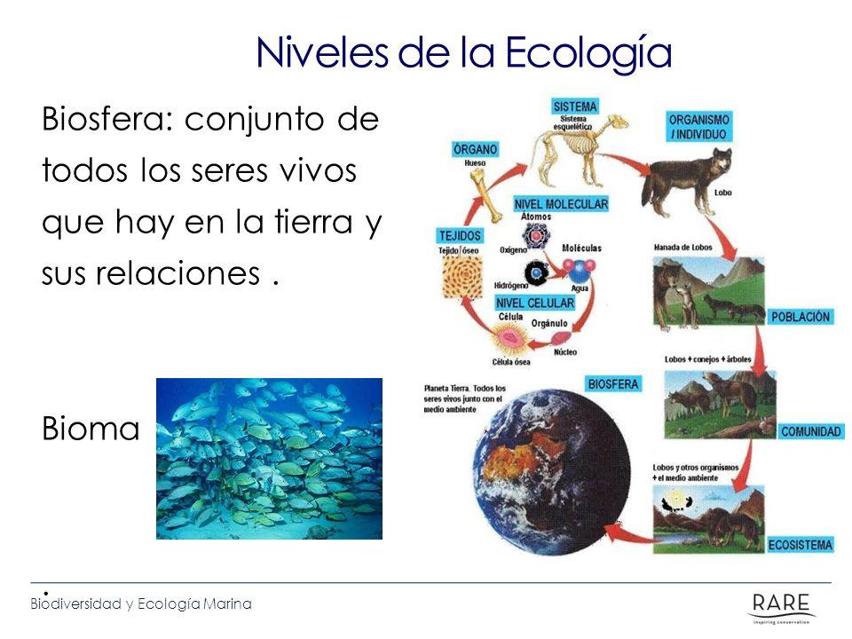 Niveles de la Ecología Biosfera: conjunto de todos los seres vivos que hay en la tierra y sus relaciones .