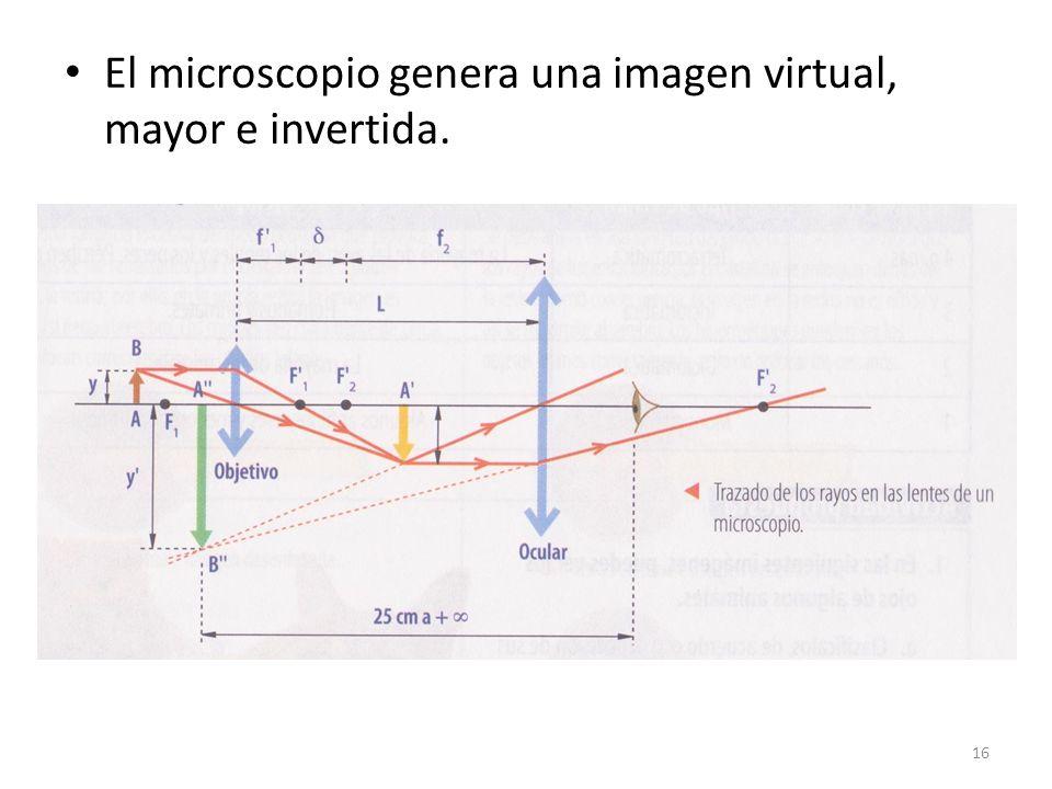 El microscopio genera una imagen virtual, mayor e invertida.
