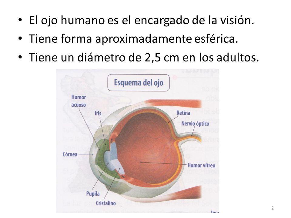 El ojo humano es el encargado de la visión.