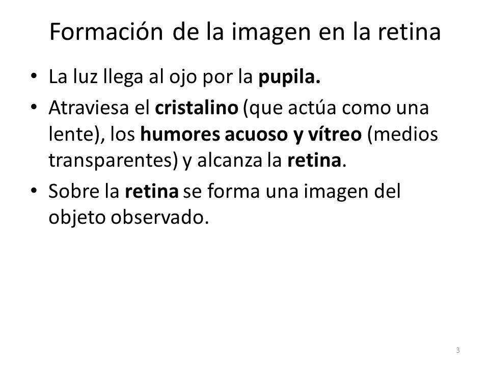 Formación de la imagen en la retina