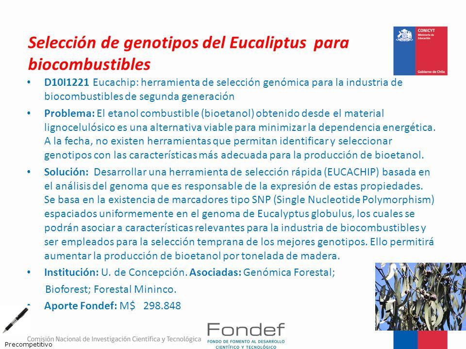 Selección de genotipos del Eucaliptus para biocombustibles