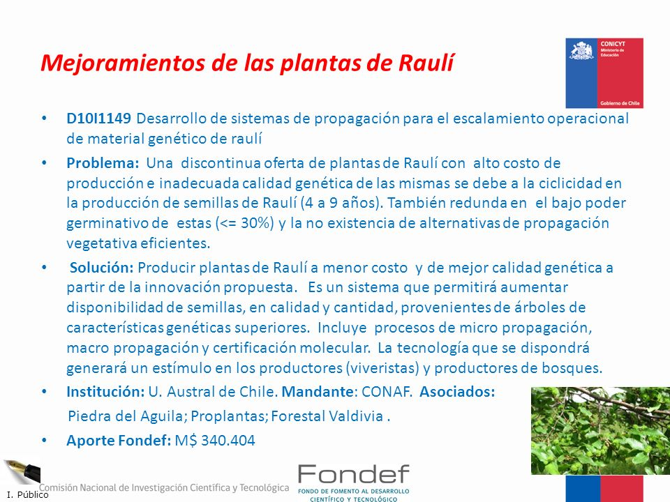 Mejoramientos de las plantas de Raulí
