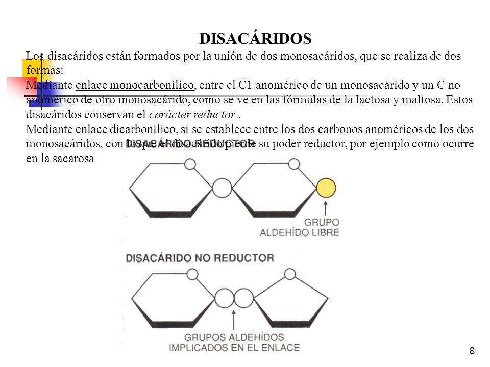DISACÁRIDOS Los disacáridos están formados por la unión de dos monosacáridos, que se realiza de dos formas: