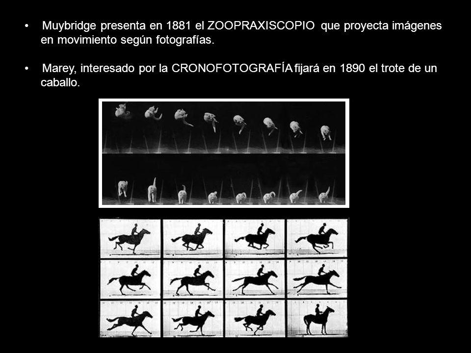 Muybridge presenta en 1881 el ZOOPRAXISCOPIO que proyecta imágenes