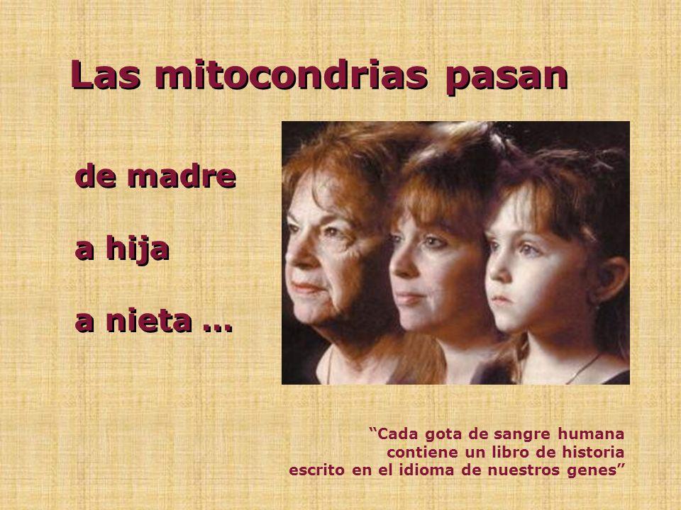Las mitocondrias pasan