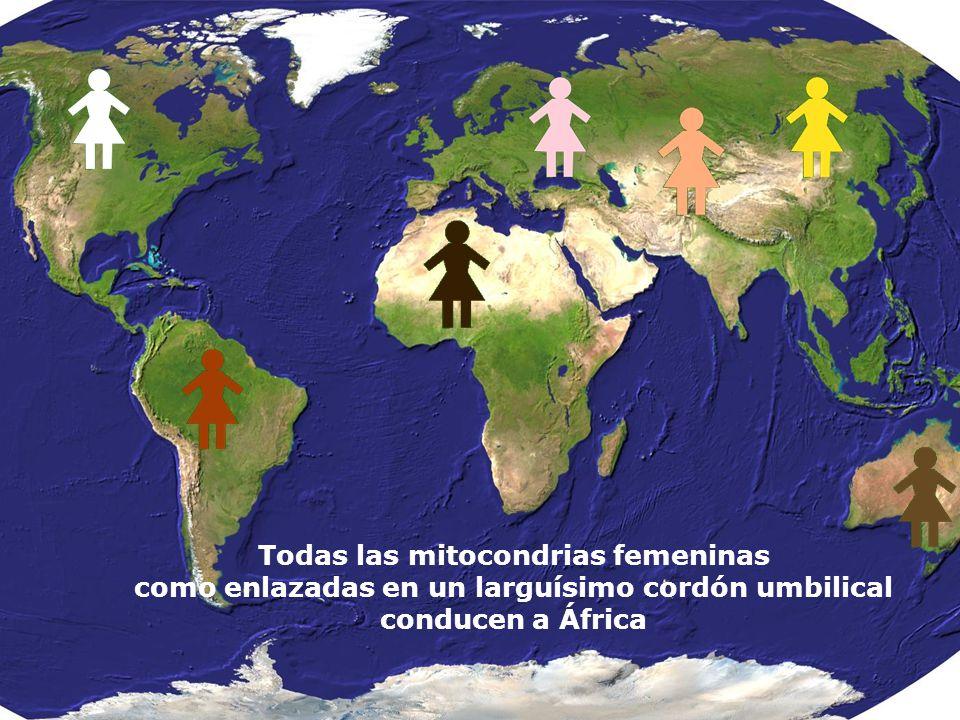 Todas las mitocondrias femeninas