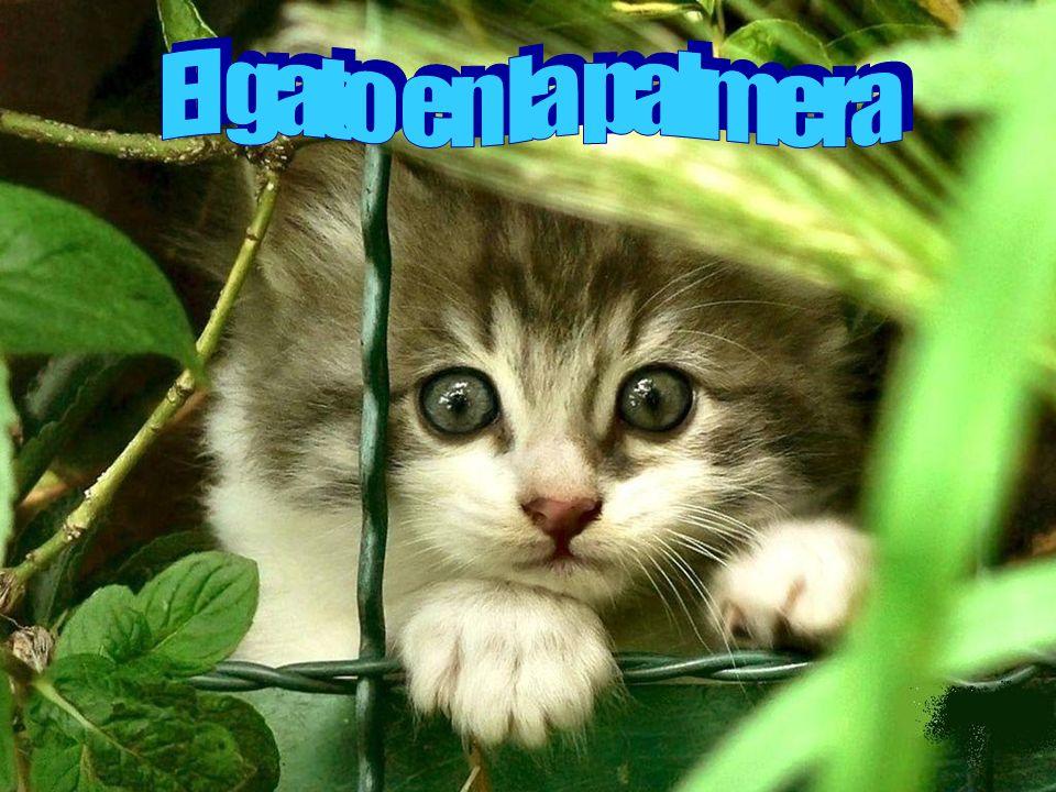 El gato en la palmera