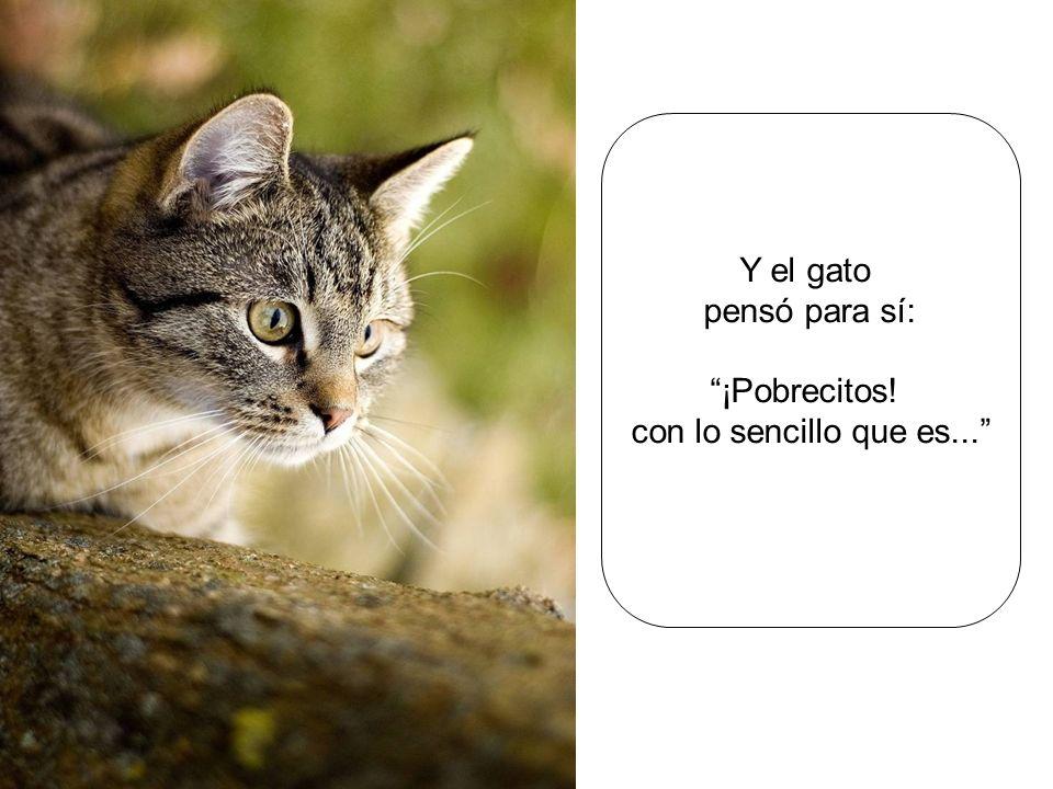 Y el gato pensó para sí: ¡Pobrecitos! con lo sencillo que es...
