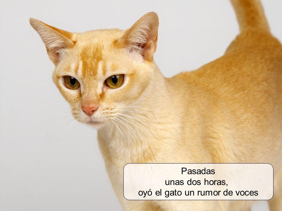 oyó el gato un rumor de voces