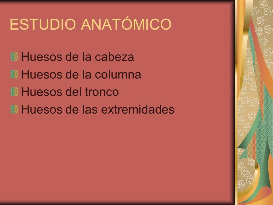 ESTUDIO ANATÓMICO Huesos de la cabeza Huesos de la columna