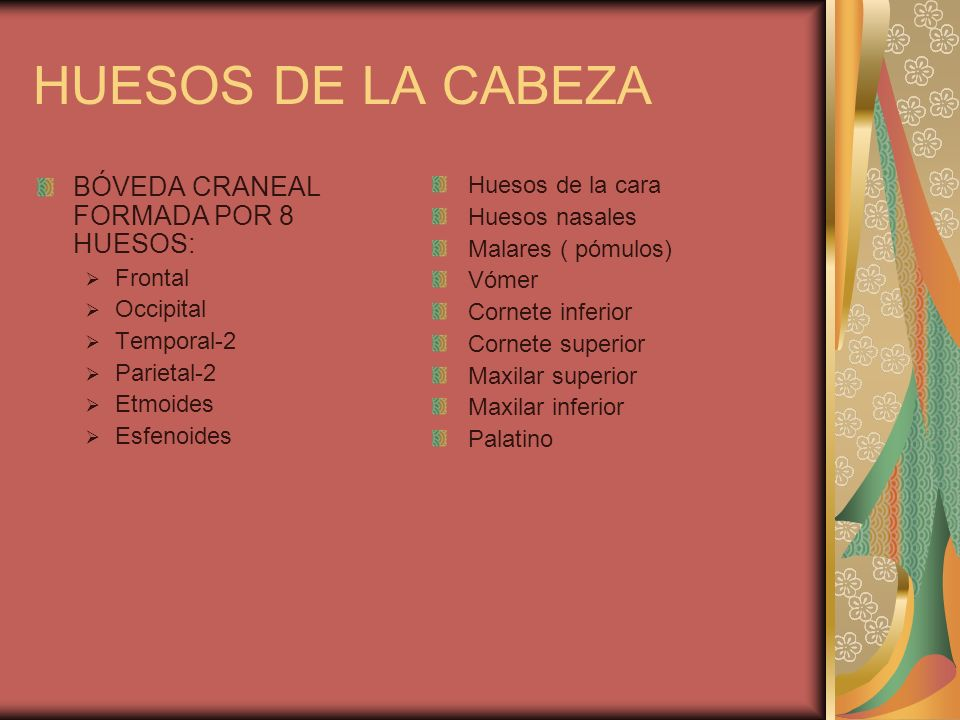 HUESOS DE LA CABEZA BÓVEDA CRANEAL FORMADA POR 8 HUESOS: