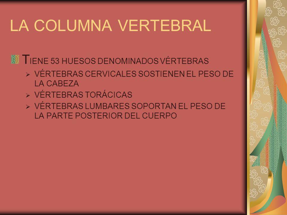 LA COLUMNA VERTEBRAL TIENE 53 HUESOS DENOMINADOS VÉRTEBRAS