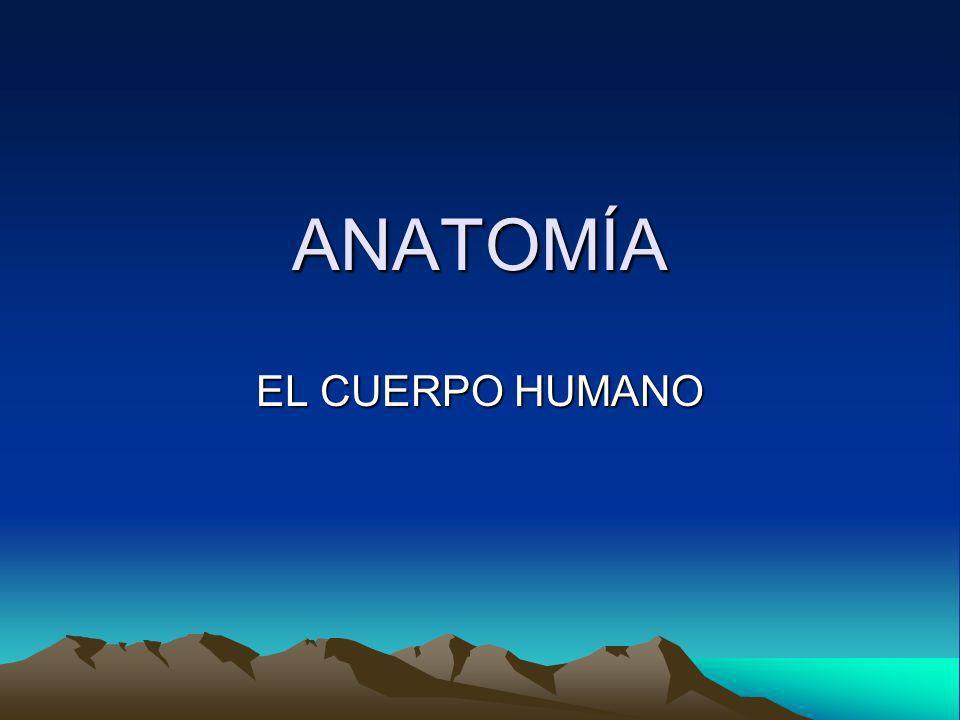 ANATOMÍA EL CUERPO HUMANO