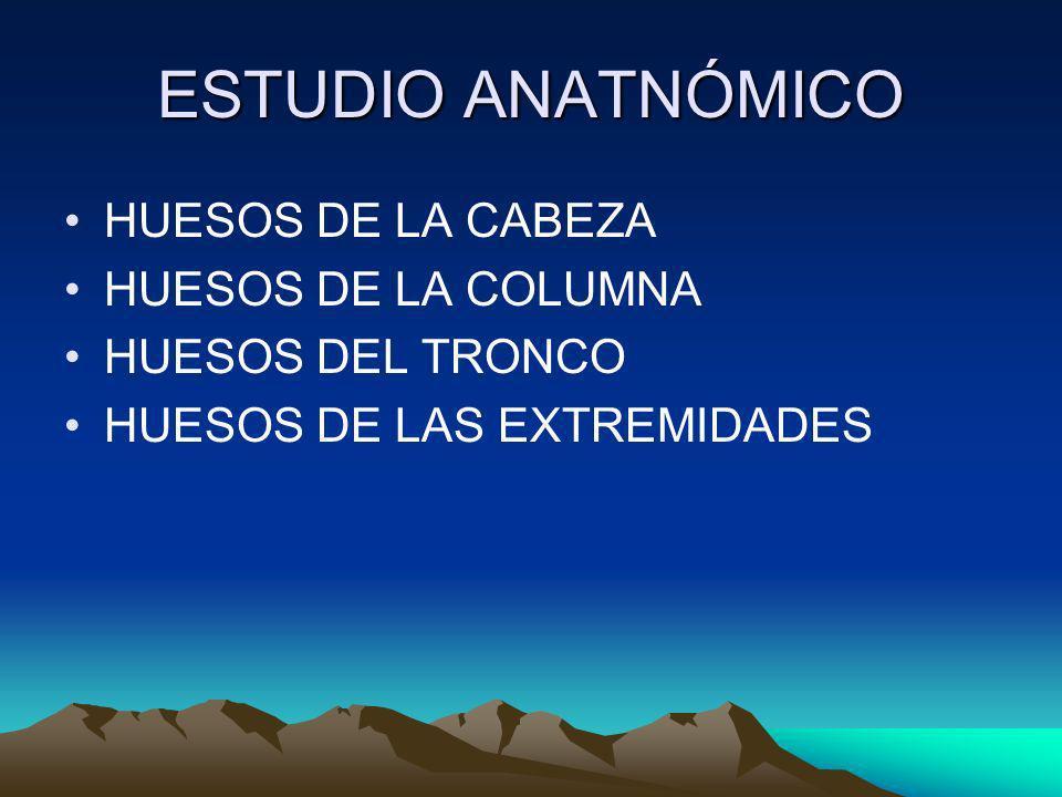 ESTUDIO ANATNÓMICO HUESOS DE LA CABEZA HUESOS DE LA COLUMNA