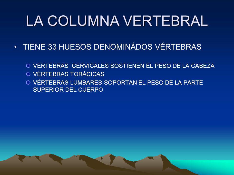 LA COLUMNA VERTEBRAL TIENE 33 HUESOS DENOMINÁDOS VÉRTEBRAS
