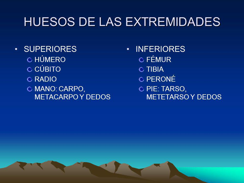 HUESOS DE LAS EXTREMIDADES