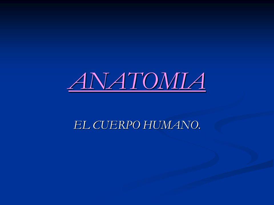ANATOMIA EL CUERPO HUMANO.