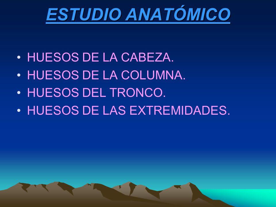 ESTUDIO ANATÓMICO HUESOS DE LA CABEZA. HUESOS DE LA COLUMNA.