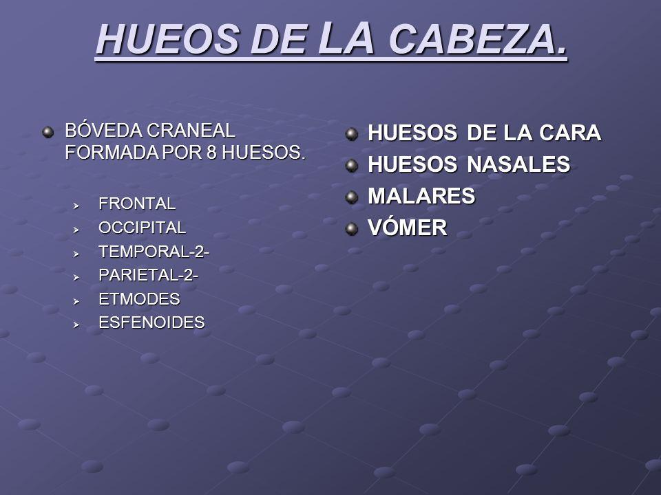 HUEOS DE LA CABEZA. HUESOS DE LA CARA HUESOS NASALES MALARES VÓMER