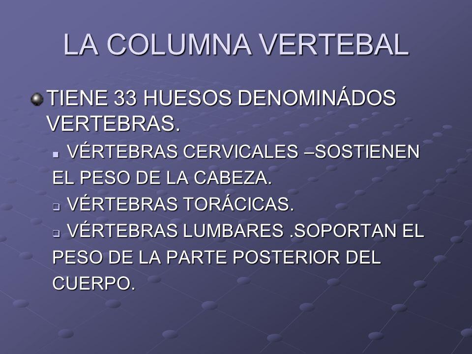LA COLUMNA VERTEBAL TIENE 33 HUESOS DENOMINÁDOS VERTEBRAS.