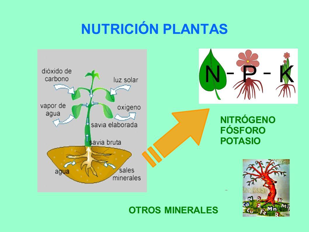 La vida en el huerto educaci n agroecol gica ppt video for Potasio para plantas