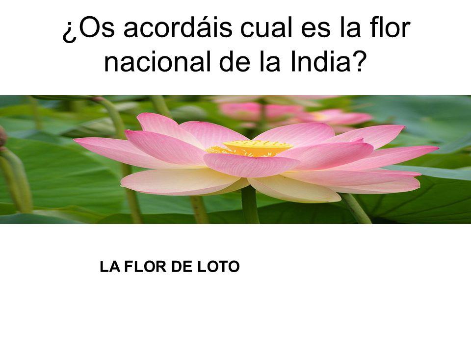 ¿Os acordáis cual es la flor nacional de la India