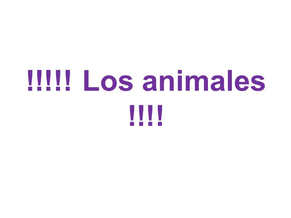 !!!!! Los animales !!!!