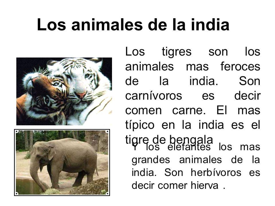 Los animales de la india
