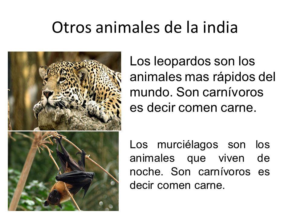 Otros animales de la india