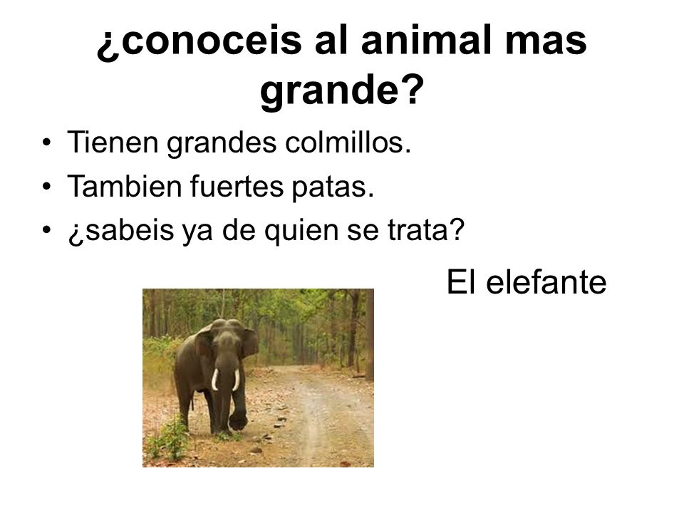 ¿conoceis al animal mas grande